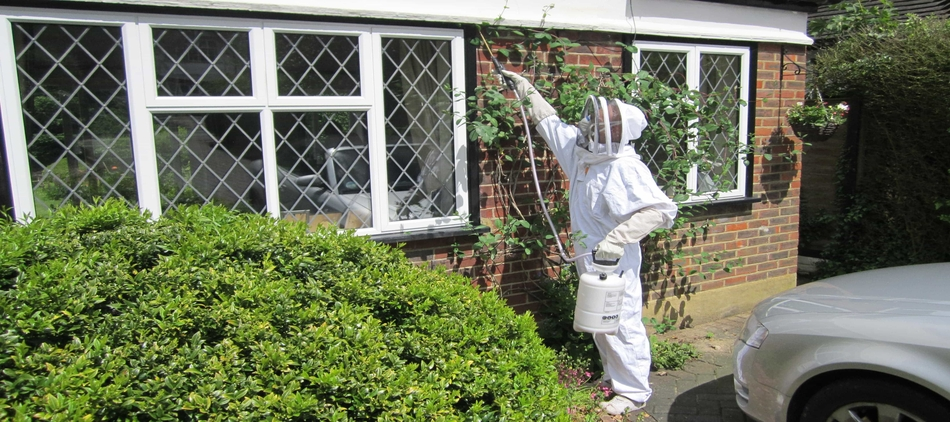 how to get rid of a wasps nest in Guildford